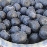 Blueberry Cara's Choice