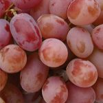 Grape Einset Seedless PP6160