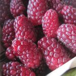 Tayberry Blackberry-Raspberry