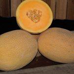 Melon Ananas Coquette Hybrid