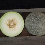 Melon Galia Regalia Hybrid