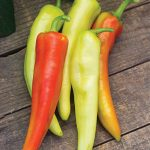 Pepper Hot Hot Daddy Hybrid