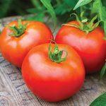 Tomato Tasti-Lee Hybrid