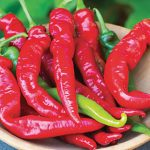Pepper Hot Cheyenne Hybrid