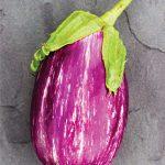 Eggplant Shooting Stars