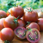 Tomato Sunchocola Hybrid