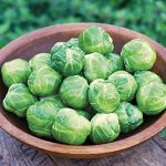 Brussels Sprout Early Marvel Hybrid