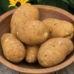 Potato Rio Grande Russet