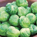 Brussels Sprouts Octia