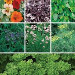 Collection Summers Essential Herbs