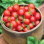 Tomato Baby Boomer Hybrid