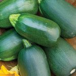 Squash Summer Green Eggs Hybrid