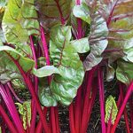 Swiss Chard Red Magic Hybrid