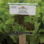 Plant ID Tags