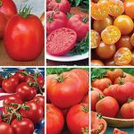 Tomato Lovers Plants Gift Collection