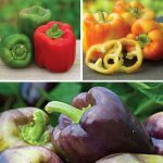 Sweet Pepper Plants Gift Collection