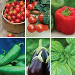 Patio Edible Plants Gift Collection