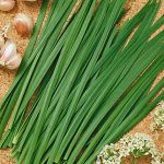 Chives Garlic Geisha Organic