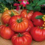 Tomato Madame Marmande Hybrid