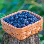 Blueberry Razz