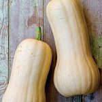 Squash Winter Atlas Hybrid
