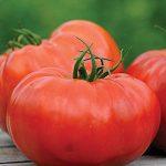 Tomato Delizia Hybrid