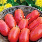 Tomato Patio Paste Hybrid