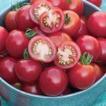Tomato Rosella Hybrid
