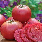 Tomato Umamin Hybrid
