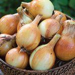 Onion Copra