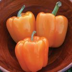 Pepper Sweet Orange Sun