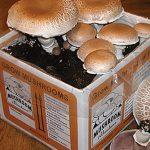 Portabella Mushroom Kit