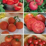 Tomato All-Purpose Tomato Collection