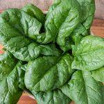 Spinach Persius Hybrid