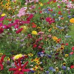 Wildflowers Hummingbird & Butterfly Mix