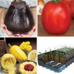 Meatless Monday Vegetables Seed Starting Collection