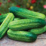 Cucumber Pick-a-Bushel Hybrid